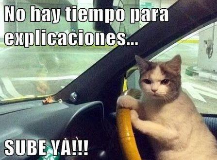 memes de gatos3