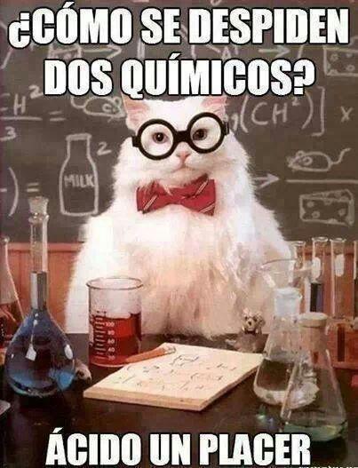 memes de gatos31
