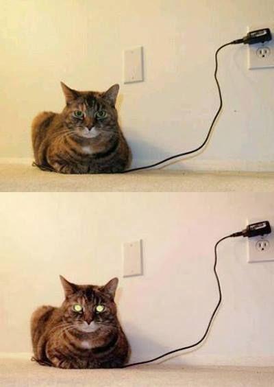 memes de gatos32