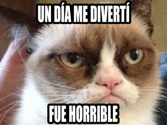 memes de gatos33