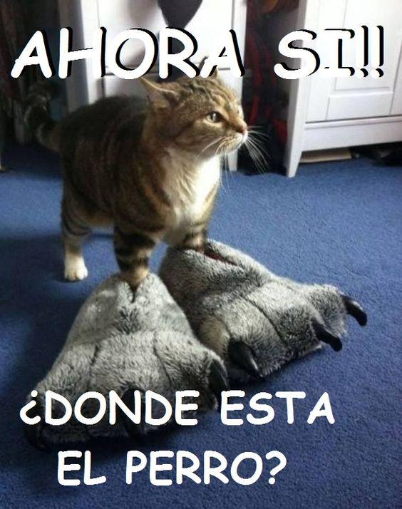 memes de gatos34