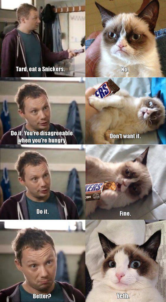 memes de gatos35