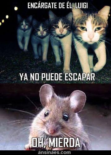 memes de gatos36