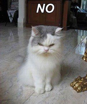memes de gatos37