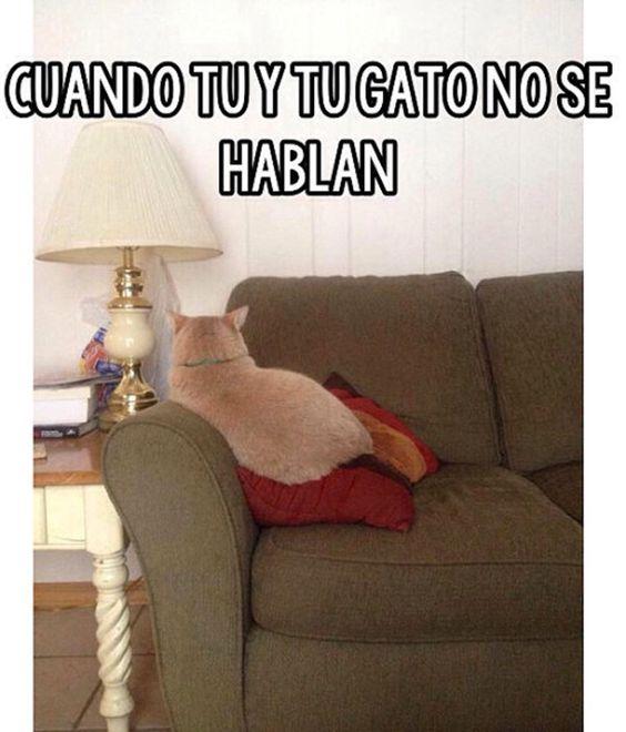 memes de gatos38