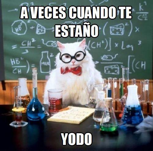 memes de gatos39