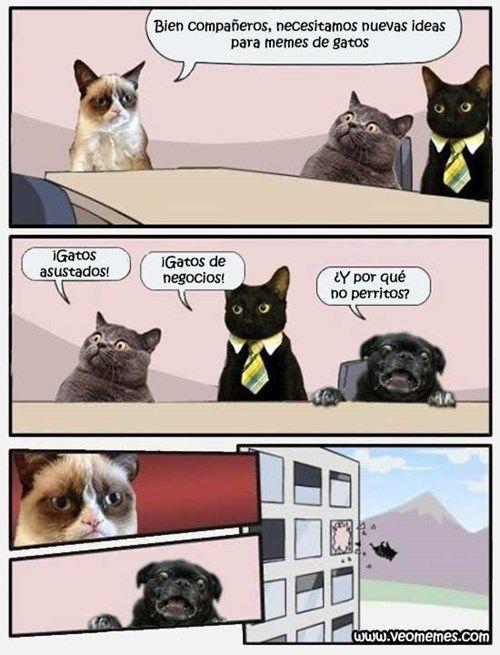 memes de gatos4