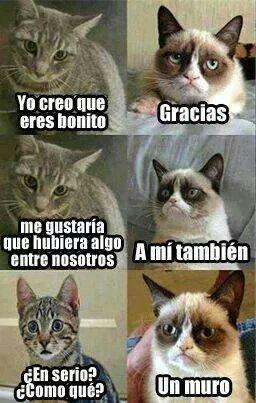 memes de gatos42