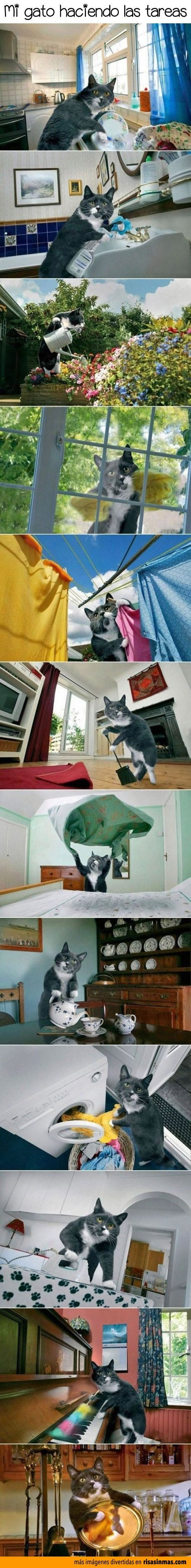 memes de gatos43