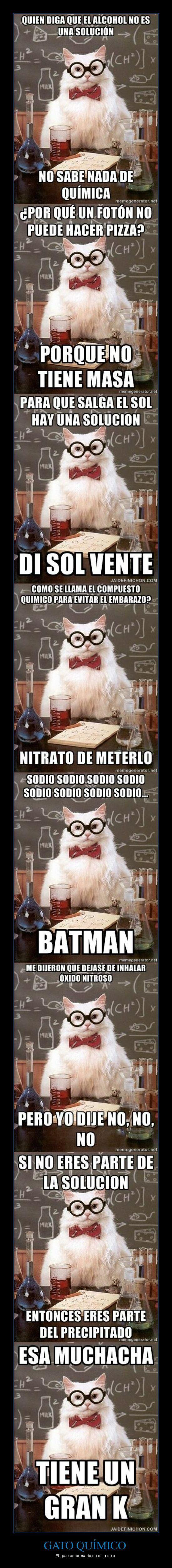 memes de gatos44
