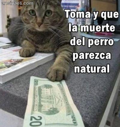 memes de gatos6