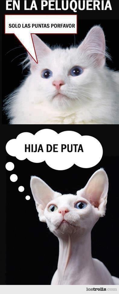 memes de gatos7