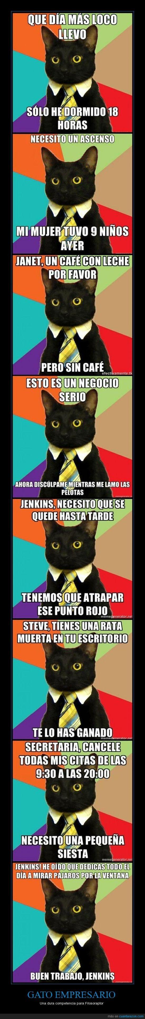 memes de gatos8
