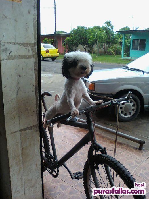 memes de bicicletas28