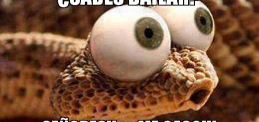 memes de baile19