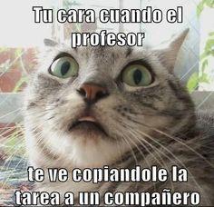 memes de profesores33