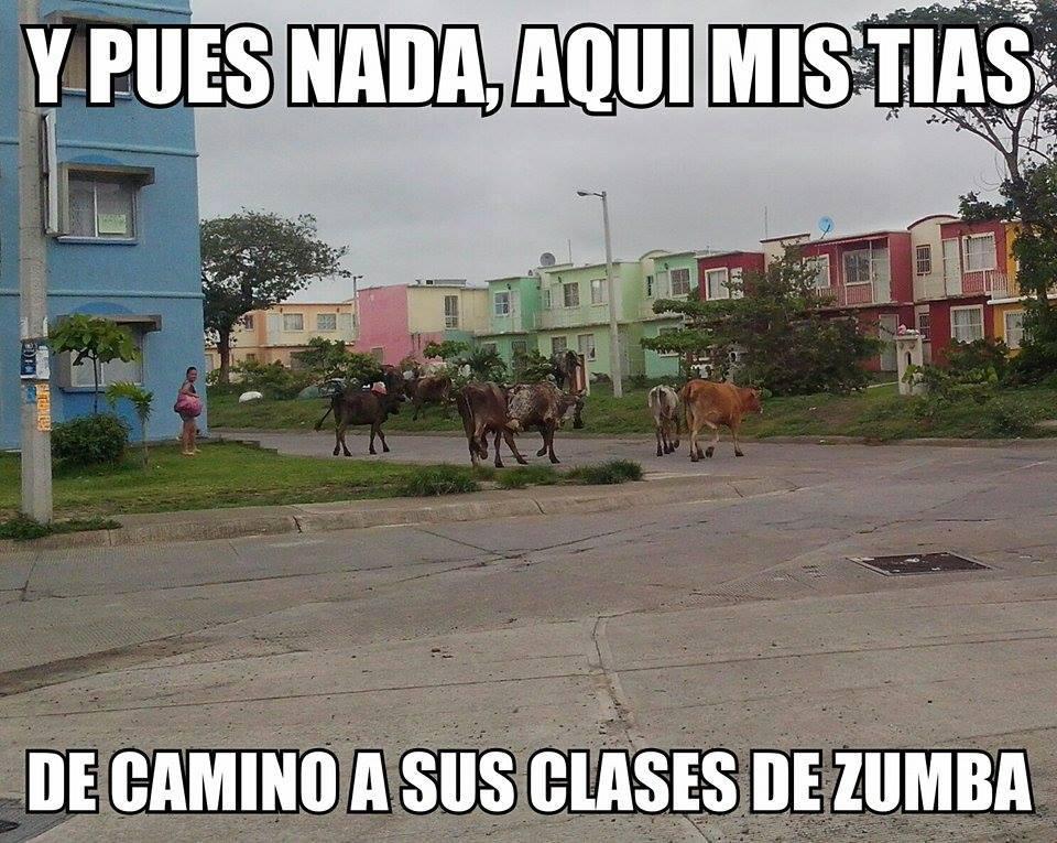 memes de zumba33