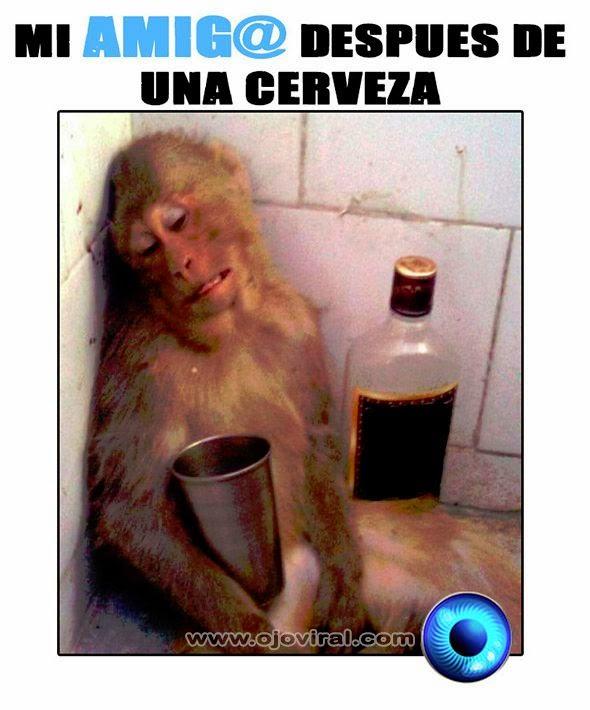 memes de amigos borrachos - mono