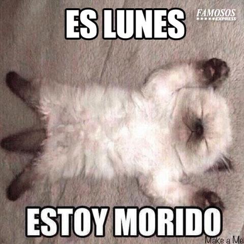 memes de flojera - gatito morido