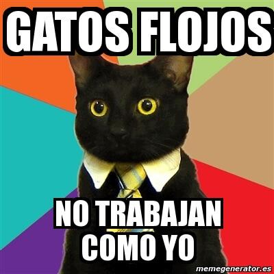 memes de flojera - gatos flojos