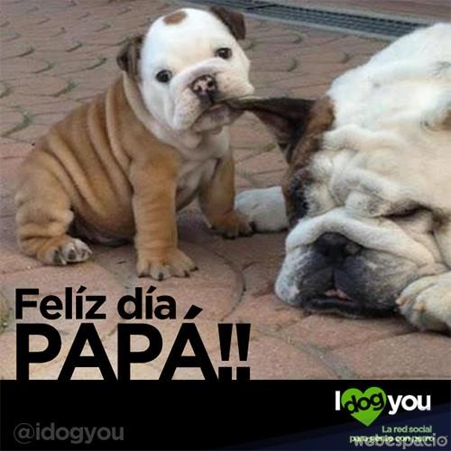 memes del dia del padre - tiernos perritos