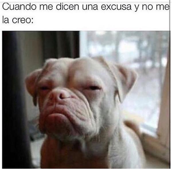 nuevas imagenes y memes chistosos - cara chistosa de perro