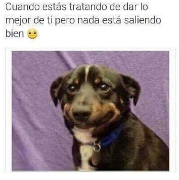 nuevas imagenes y memes chistosos - mi cara de perro