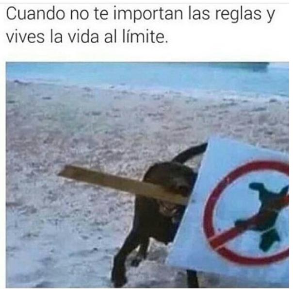 nuevas imagenes y memes chistosos - perro rebelde