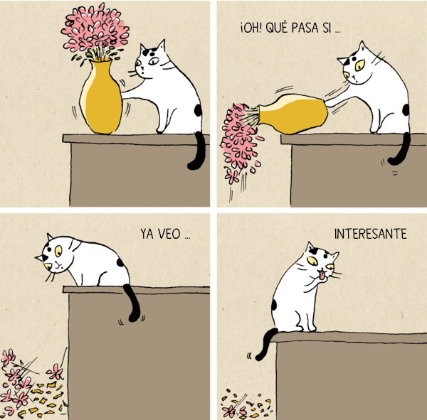 imagenes chistosas nuevas 2016 - gatos