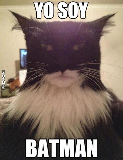 memes de batman - gato igualito a batman