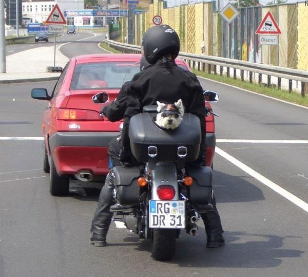 memes de motos - perrito