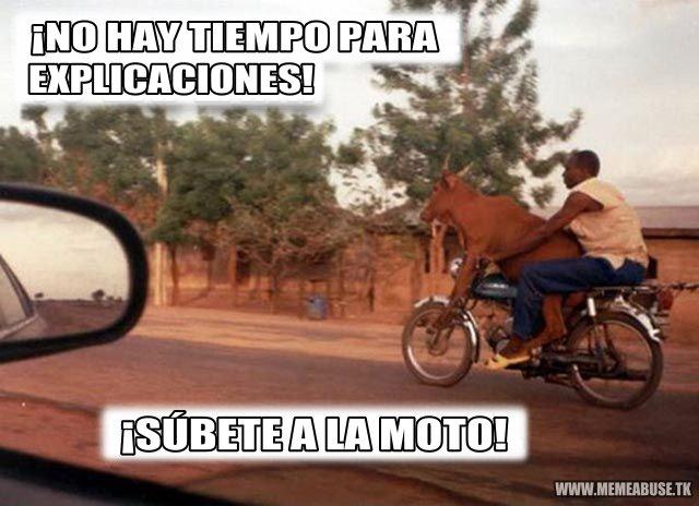 memes de motos - vaca en moto