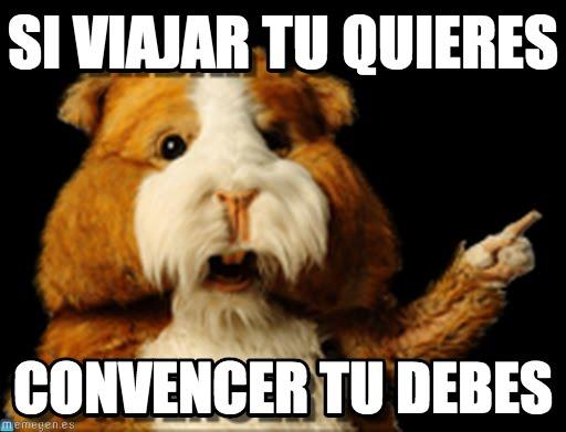 memes de viajes - hamster