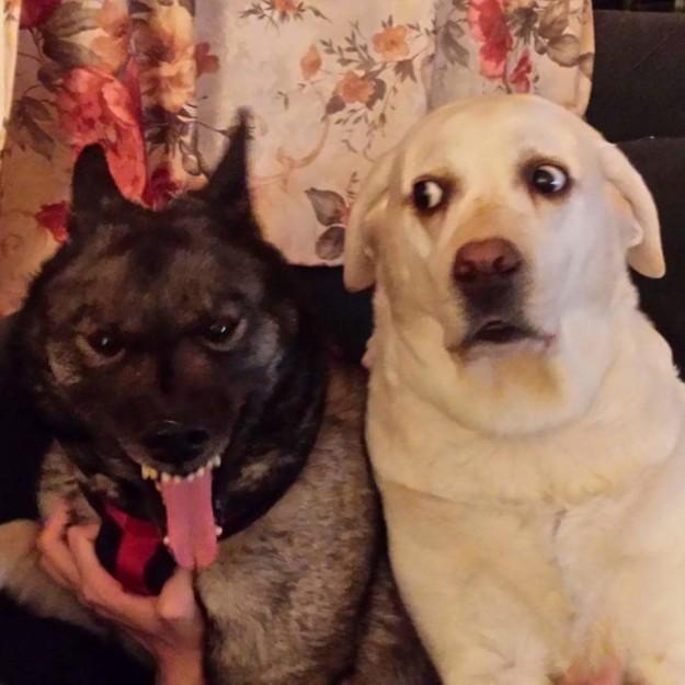 imagenes graciosas de animales - amigos perros