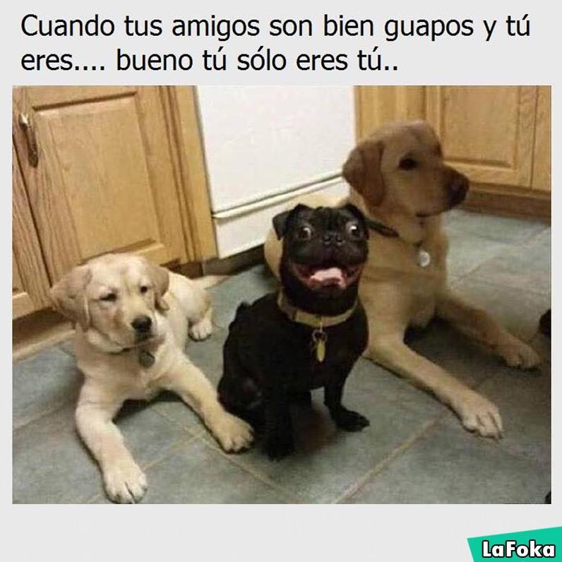 imagenes graciosas de animales - amigos