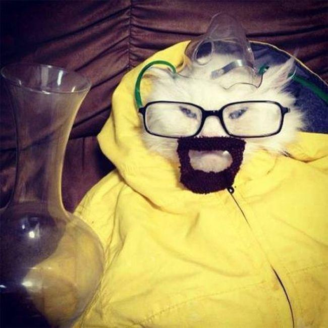 imagenes graciosas de animales - breaking bad
