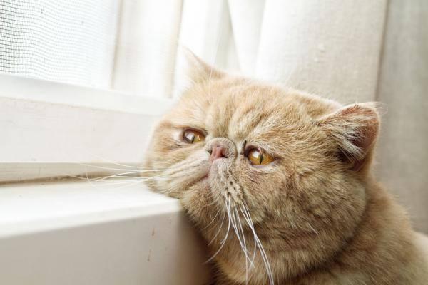 imagenes graciosas de animales - cara de gato