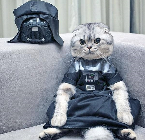 imagenes graciosas de animales - disfraz nuevo