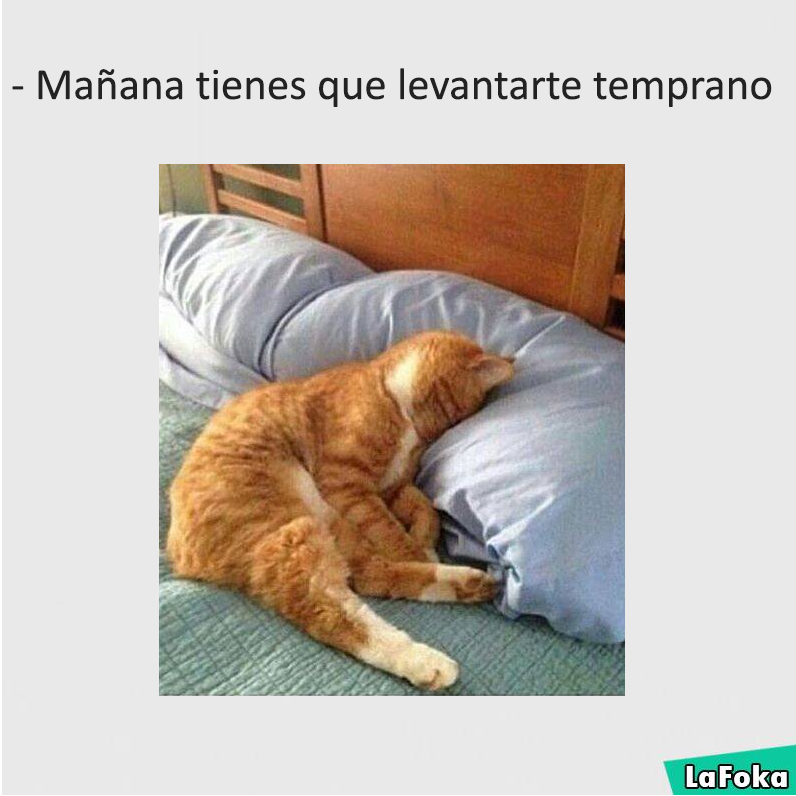 imagenes graciosas de animales - durmiendo