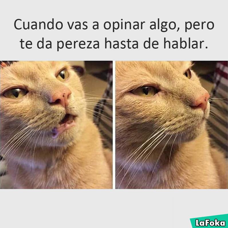 imagenes graciosas de animales - gato reaccion