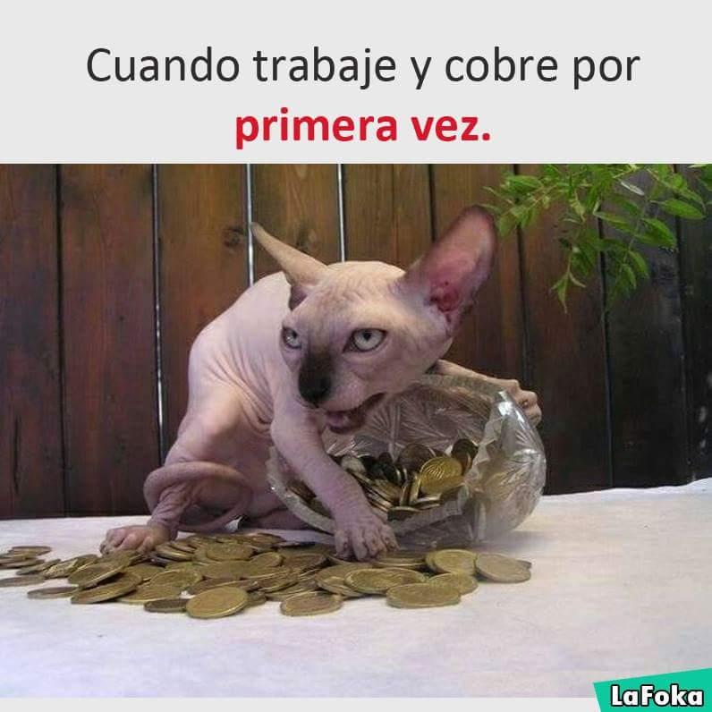 imagenes graciosas de animales - gato