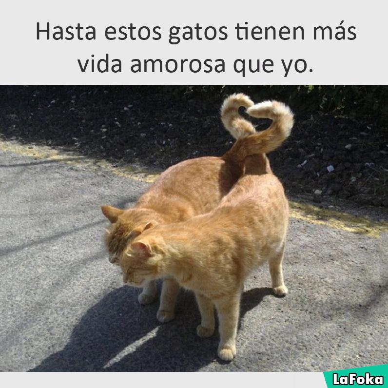 imagenes graciosas de animales - gatos
