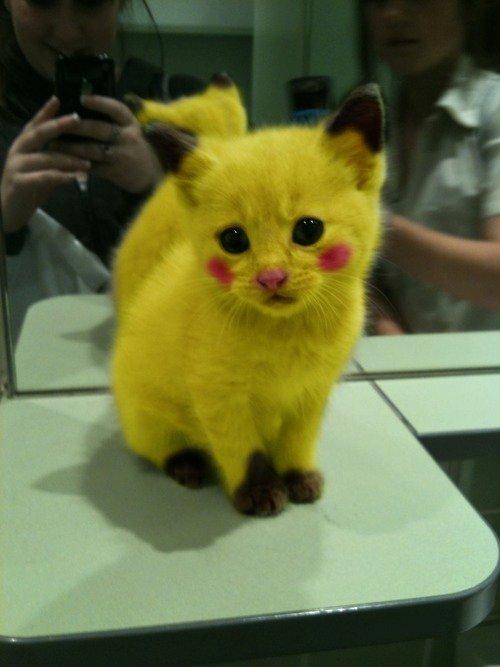 imagenes graciosas de animales - picachu gato