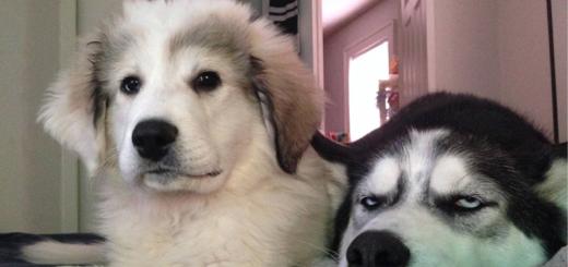 imagenes graciosas de animales - yo y mi novia