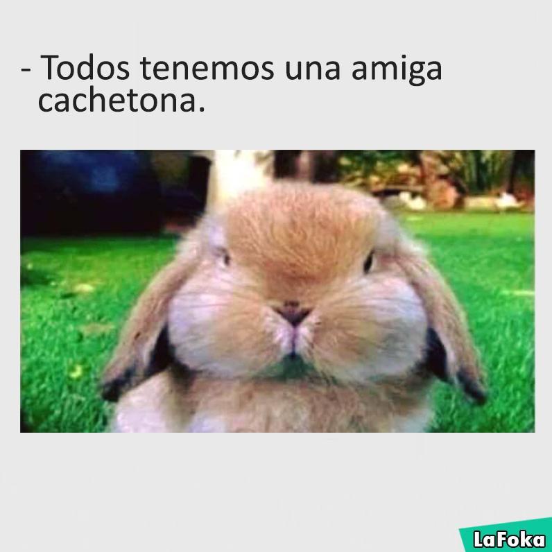 imagenes y memes chistosos 2016 - conejo cacheton