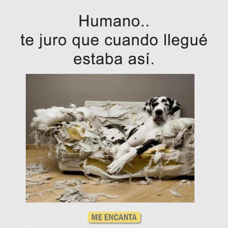 imagenes y memes chistosos 2016 - destrozo de perro