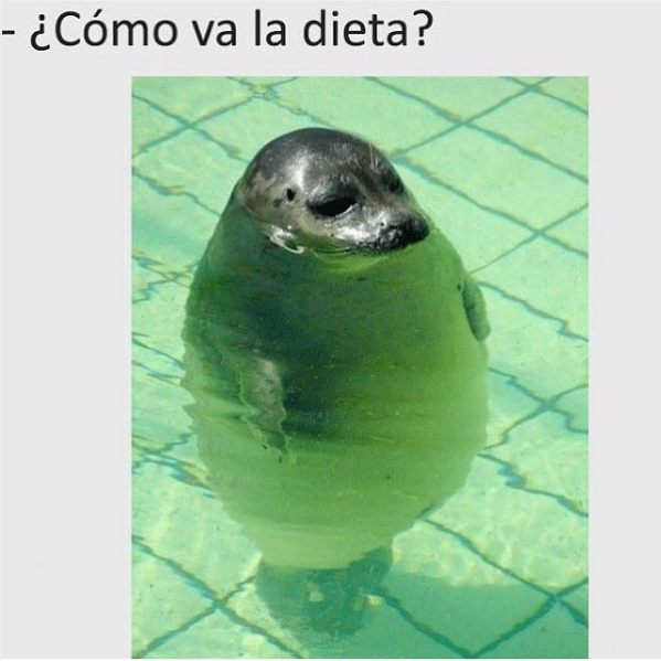 imagenes y memes chistosos 2016 - dieta