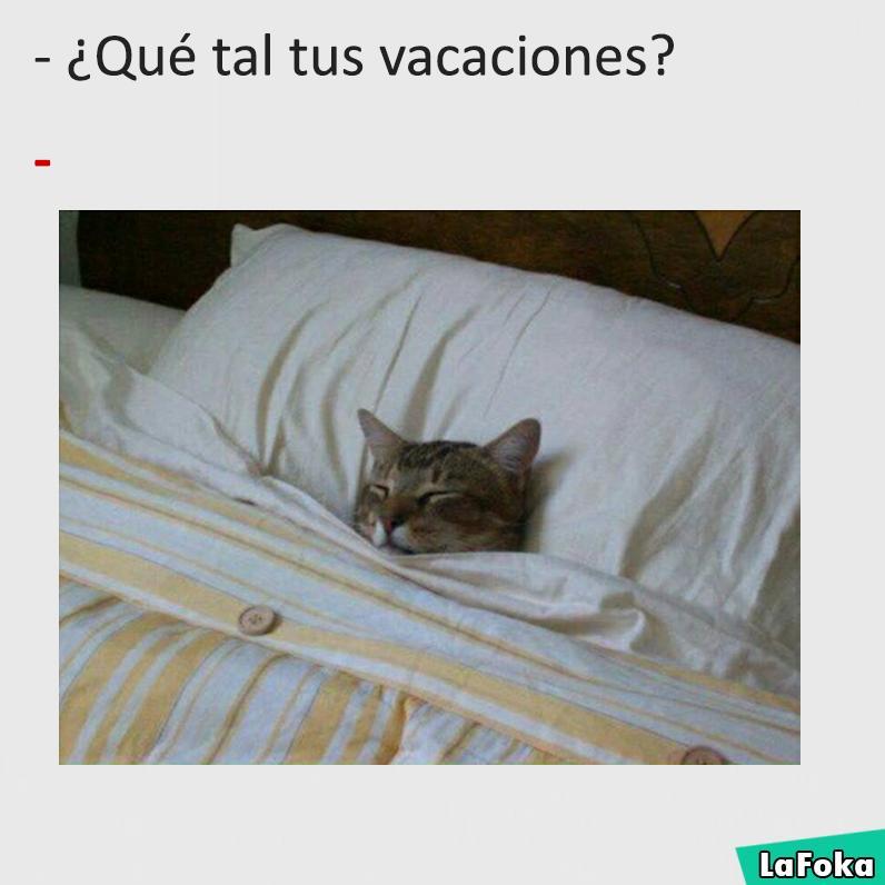 imagenes y memes chistosos 2016 - gato durmiendo
