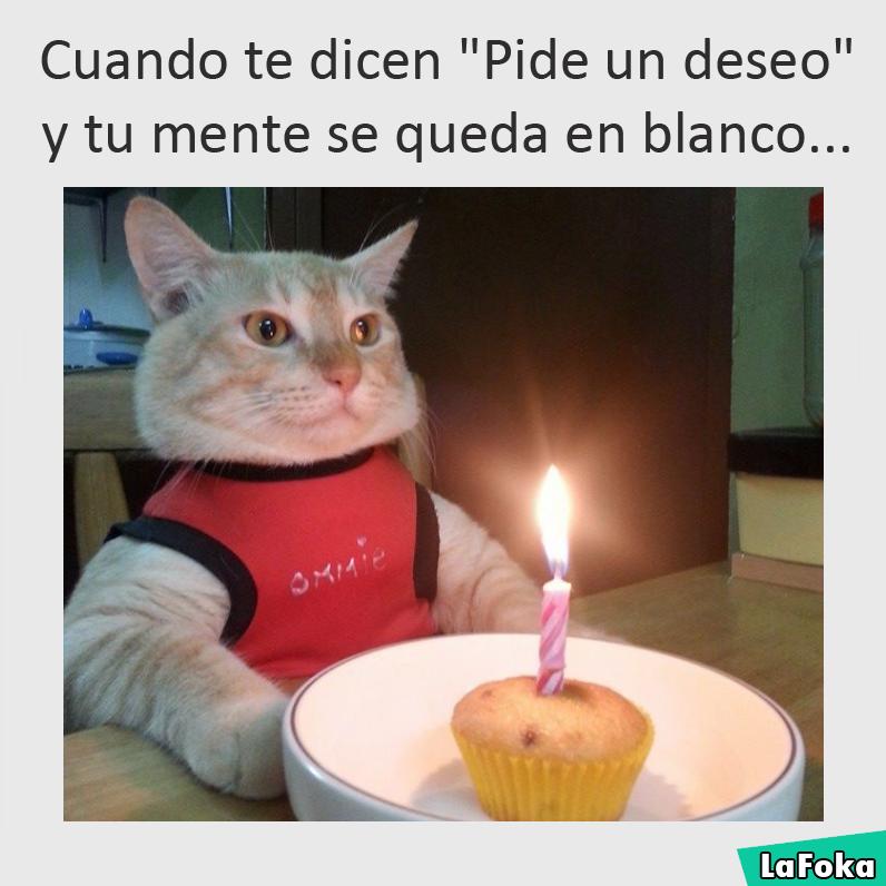 imagenes y memes chistosos 2016 - gato