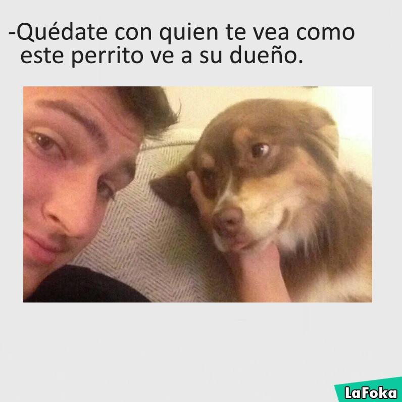 imagenes y memes chistosos 2016 - perrito